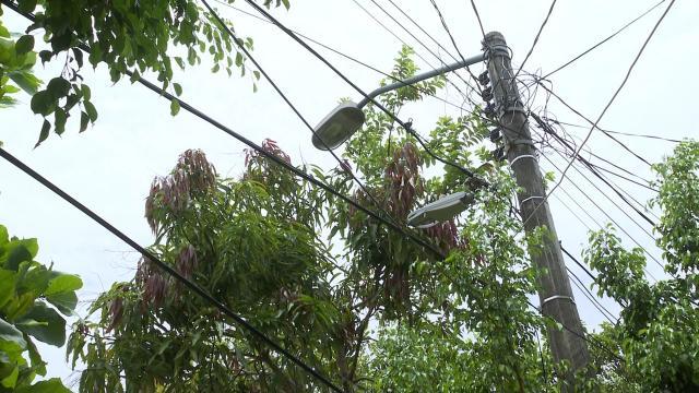 Árbol caído sobre cables
