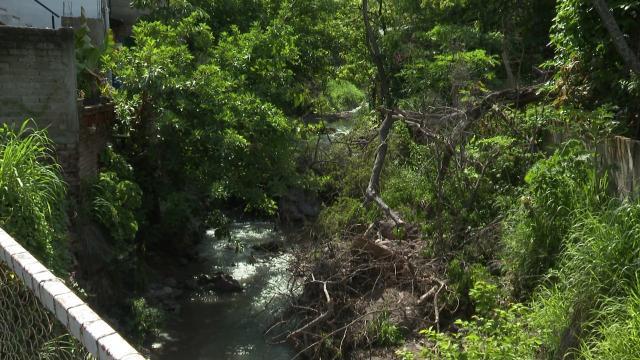 Arroyo tapado con árboles