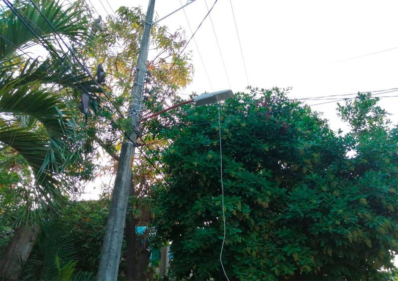 Árbol obstrucción