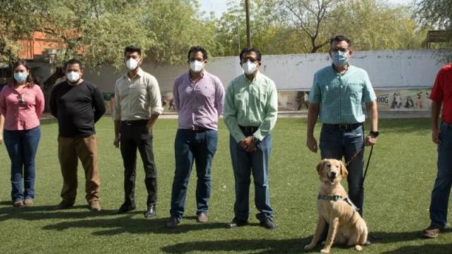 Perros entrenados para detectar covid-19