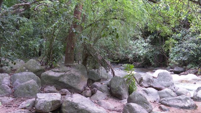 Río Cuale
