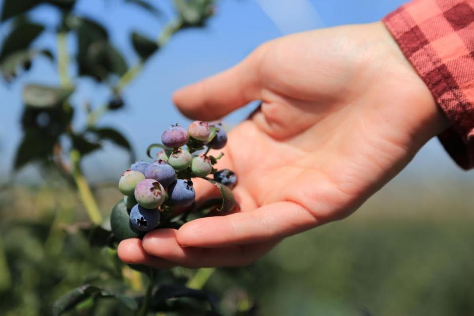 Hortalizas y berries bajo investigación estadounidense
