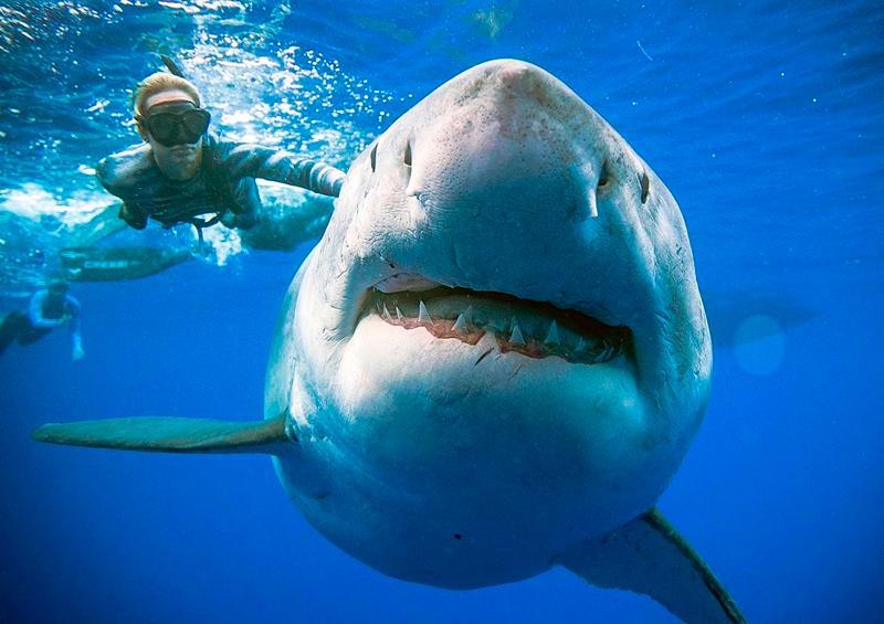 """Plantean prohibir y sancionar """"finning"""" o cercenar aletas de tiburón"""