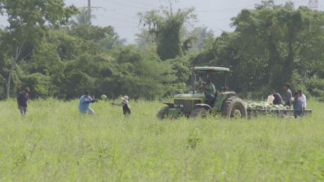 Agricultores en Bahía de Banderas