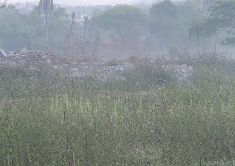Imparable ecocidio en la Laguna de Tomasa