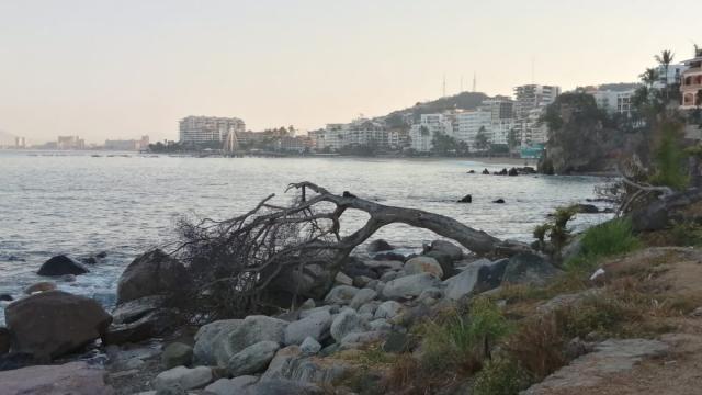 árbol tirado sobre la playa