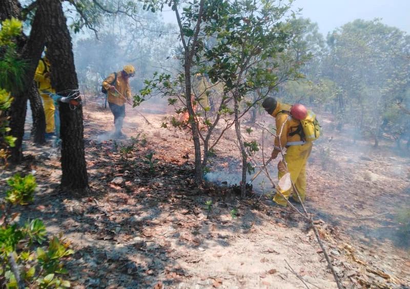 Incendio controlado: Regresan bomberos de Vallarta