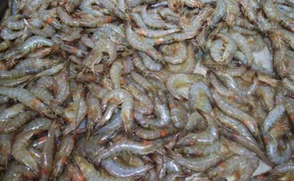 Estados Unidos suspende la certificación de camarón mexicano