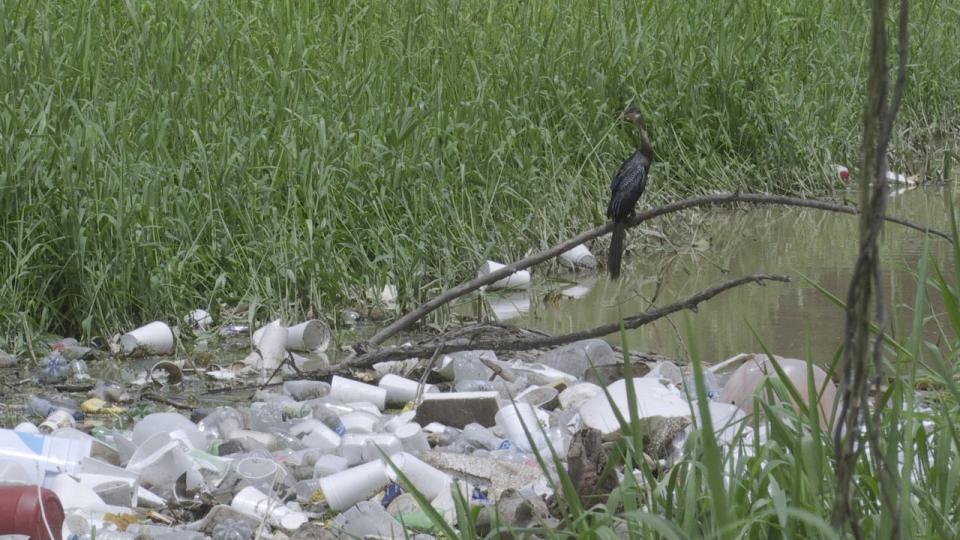 Rebosante de basura el canal Parque Las Palmas