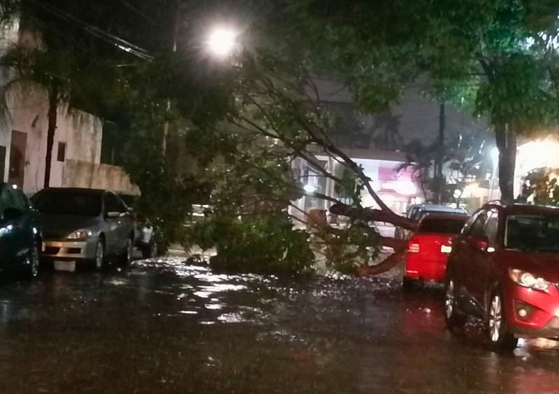 Árbol caído en Versalles por tormentas