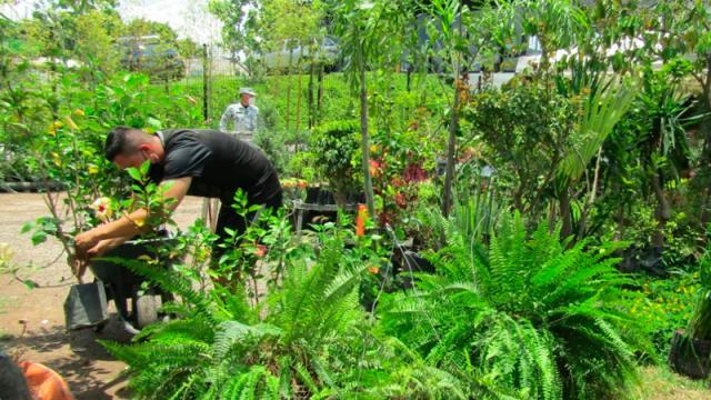 Empresarios de AEBBA donan más de 2,000 plantas a la GN