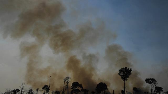 Amazonas emisora de CO2