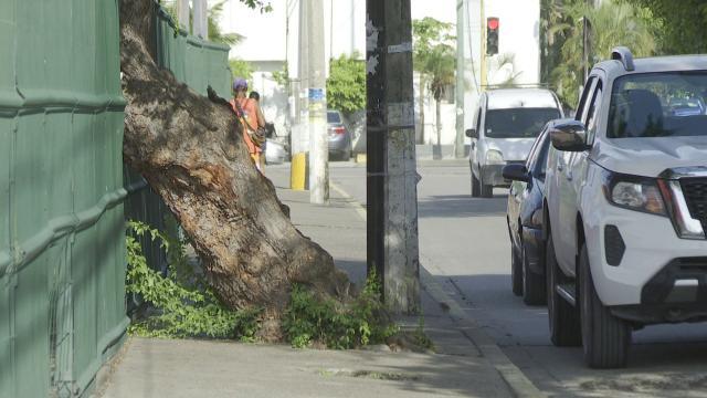 Árboles bloquean circulación en Jesús González Gallo