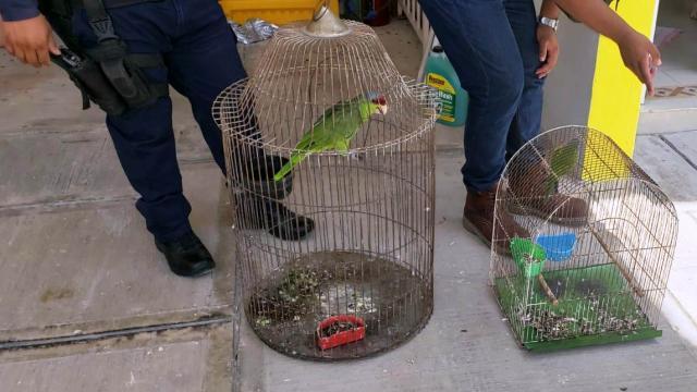 Aves en cautiverio son decomisadas