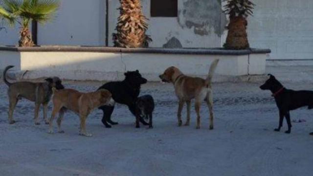 Perros atacan a hombre
