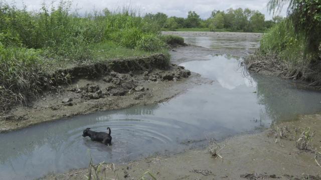 Sigue la contaminación del Río Ameca con aguas negras