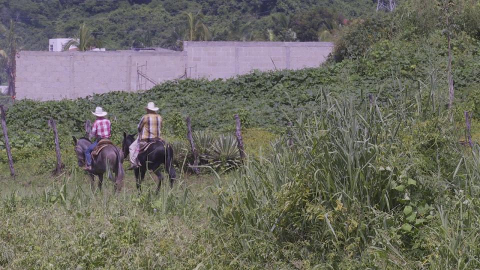 Apoyos para agricultores han sido suspendidos