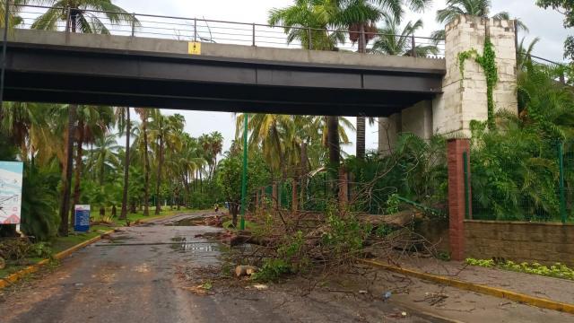 Árboles caídos en avenida Cocoteros de Bahía de Banderas