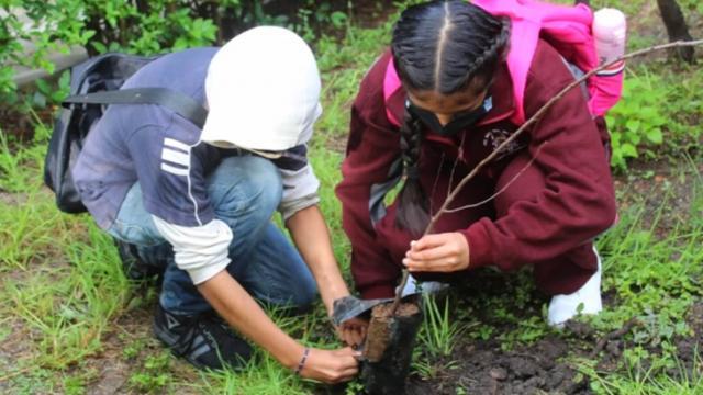 Alumnos siembran árboles en honor a maestros que murieron por Covid-19