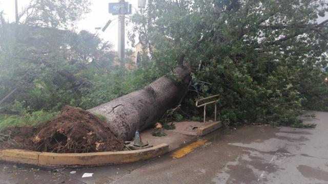 Árbol caído por huracán Nora