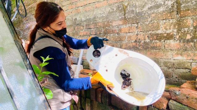 Registra Octava Región Sanitaria solo 11 casos de dengue