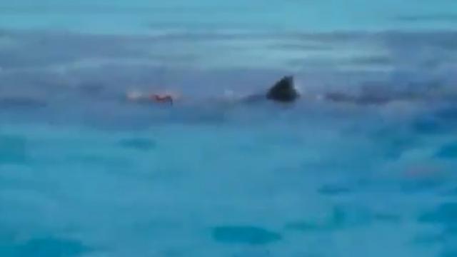 Tiburones impiden rescate de cadáver