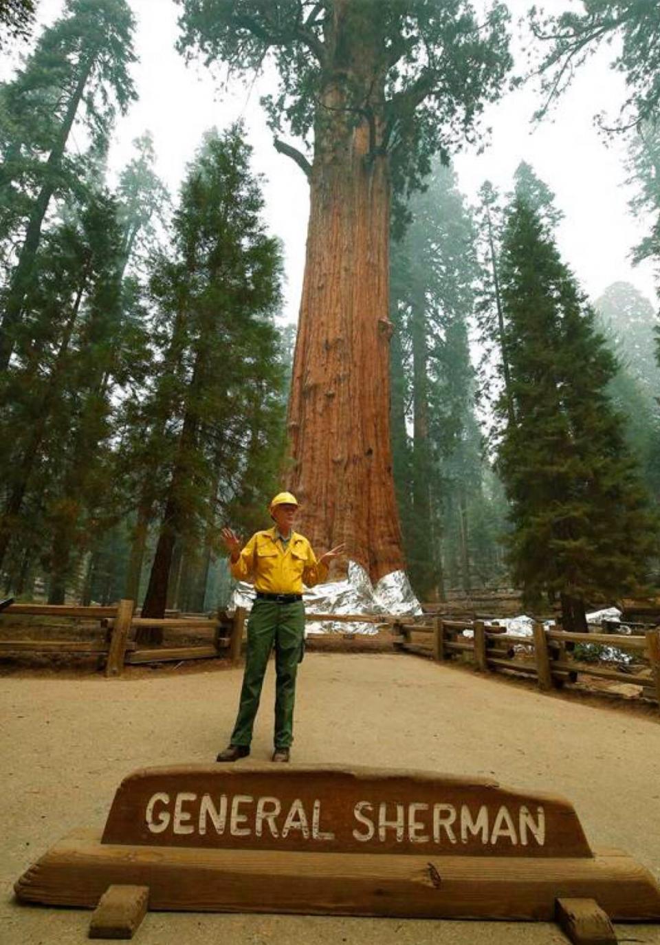 Árbol más grande del mundo