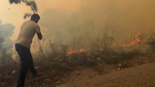Incendios forestales en siria